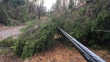 Downed trees, power outages in Monroe County following possible tornado