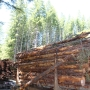 Environmentalists want to stop logging on former state land